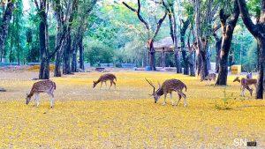 8.Sanjay Gandhi National Park